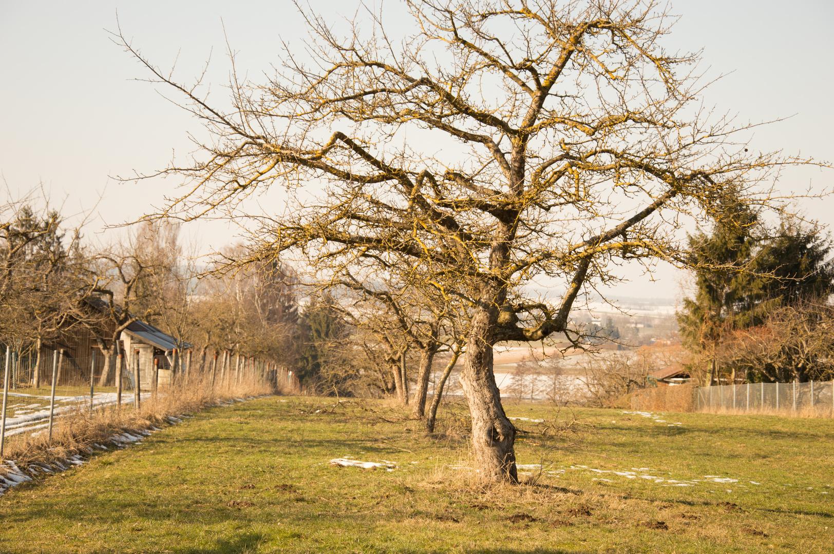 schöne Baumlandschaft