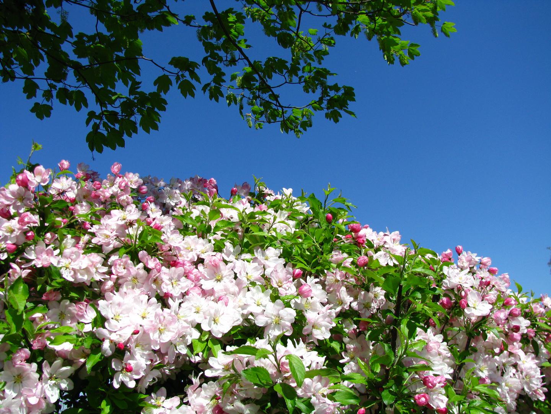 Schöne Blüte.