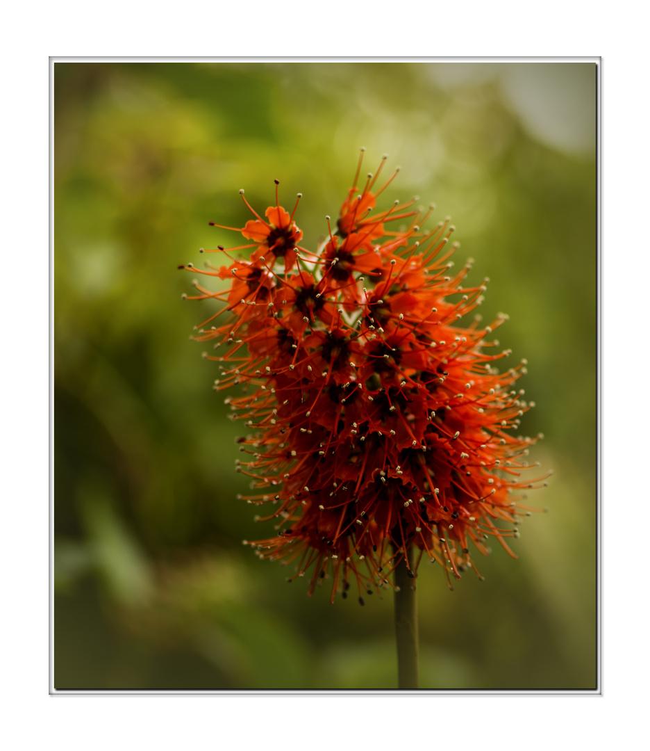 schöne Blüte im Botanischen Garten