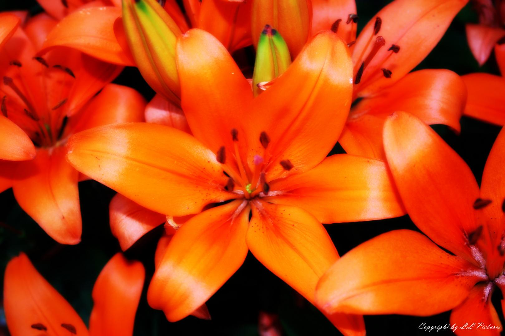 Schöne Blüte im Garten :)