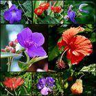 Schöne Blüten . . .