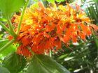 Schöne Blume2