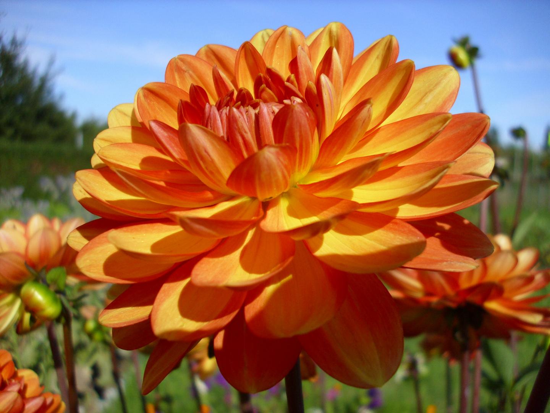 Schöne Blumen schenk ich Dir