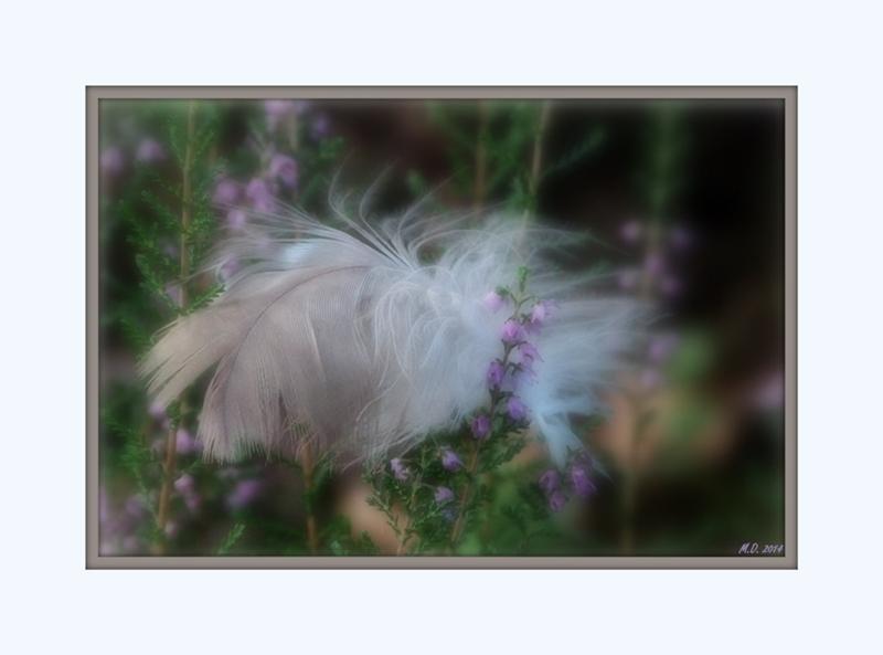 Schöne Dinge der Natur kosten nicht einen Cent...man muß sie nur sehen...