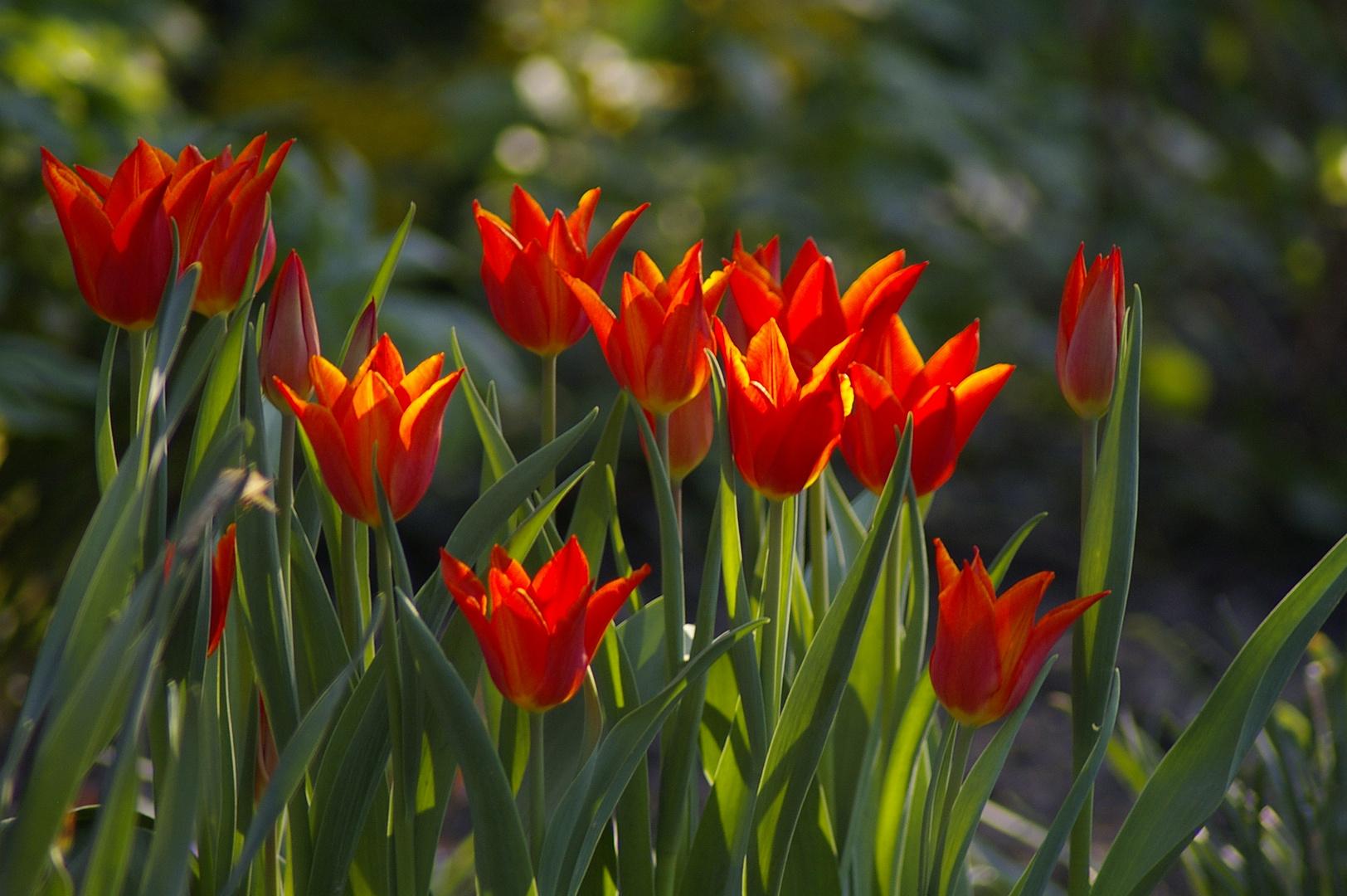 Schöne Farben im Frühjahr.
