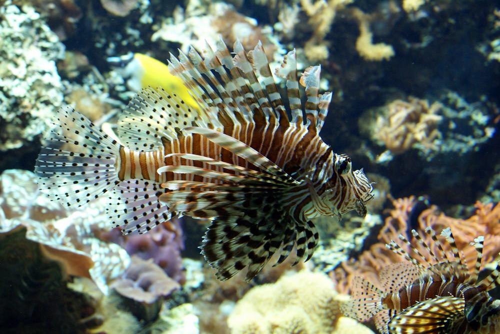 schöne Fische ohne zu tauchen