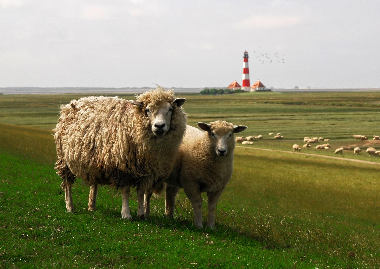 schöne Grüße aus Nordfriesland