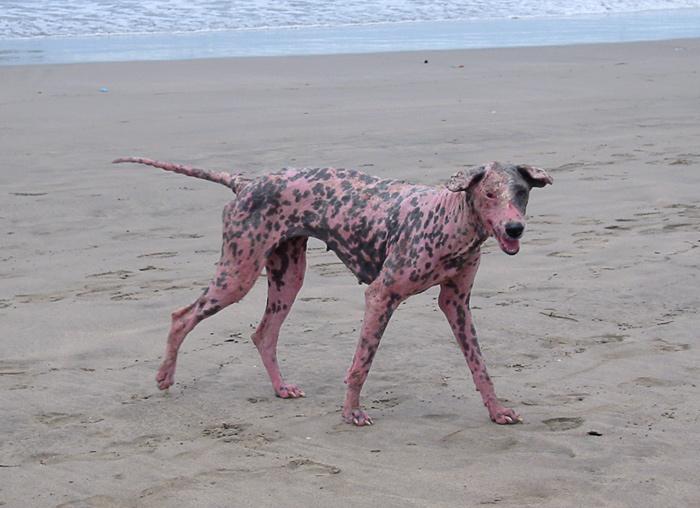 schöne hunde kommen überall hin...
