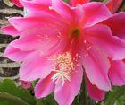Schöne Momente im Botanischer Garten Bochum