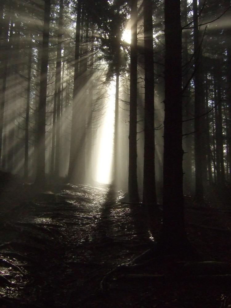 """Schöne Nebelstimmung auf dem Weg zum """"Hörnle"""
