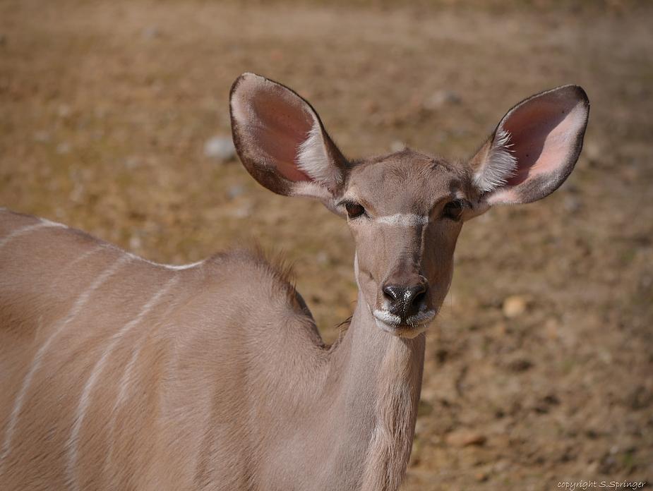 Schöne Ohren .....