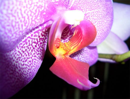 Schöne Orchidee