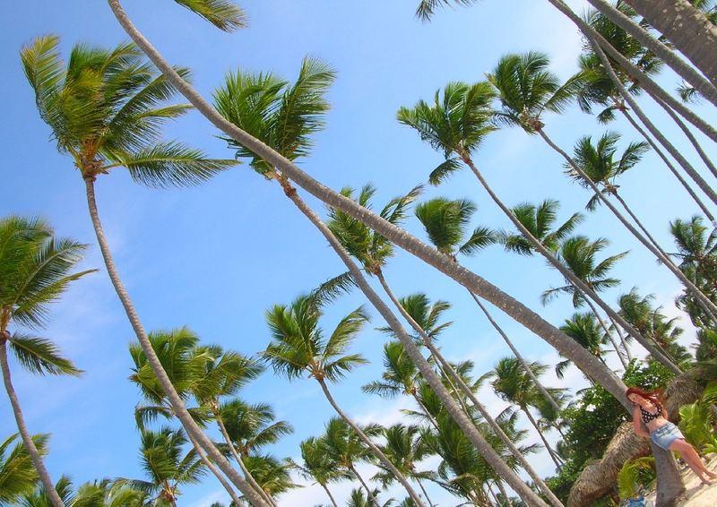 Schöne Palmen und meine schöne Frau