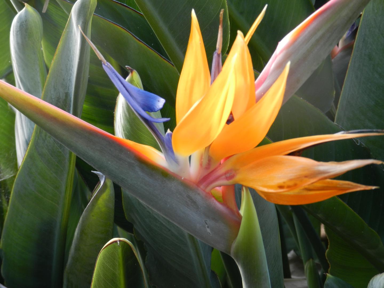 Schöne Pflanze in Monaco