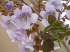 Schöne seltene Blüten auf Mallorca