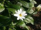schöne weiße Blume<3