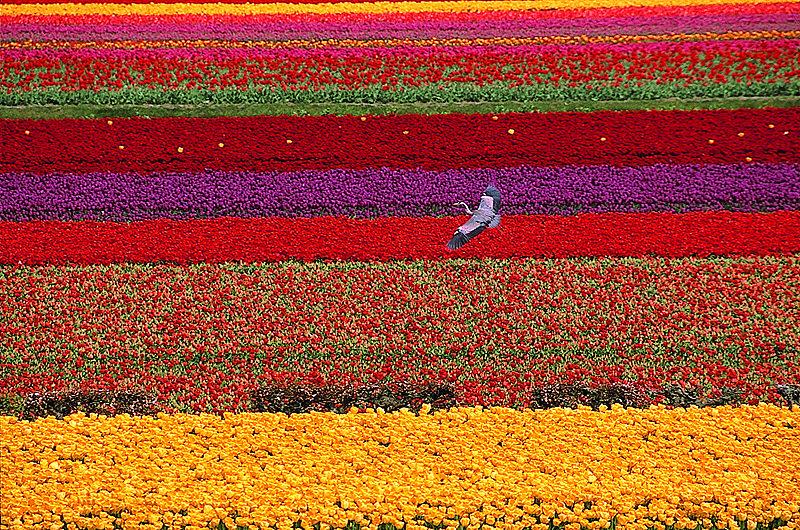 Schöne Welt - nur auf den 1. Blick...