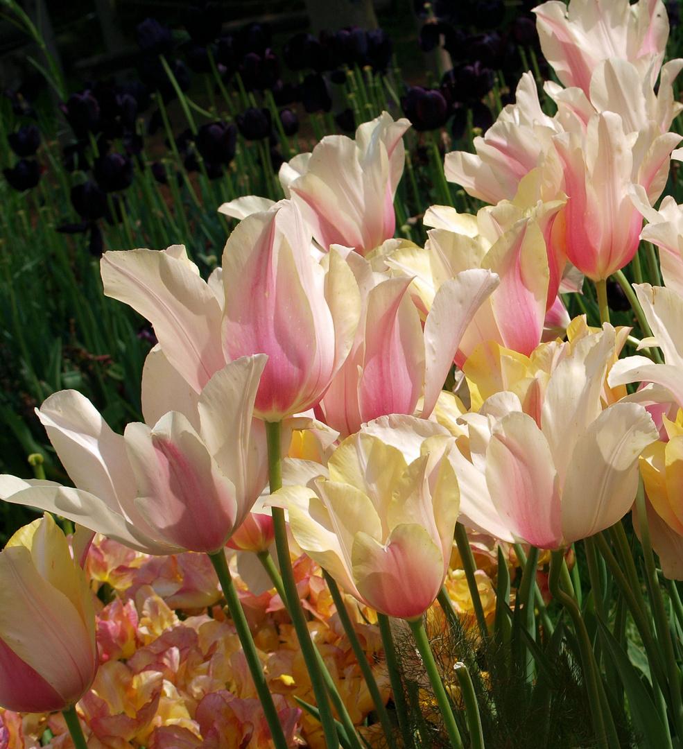 Schönen Sonntag :) und schönen Muttertag