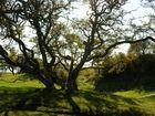 Schöner Baum in Dänemark