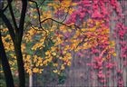 Schöner, bunter Herbst