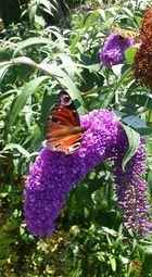 Schöner Garten Besucher
