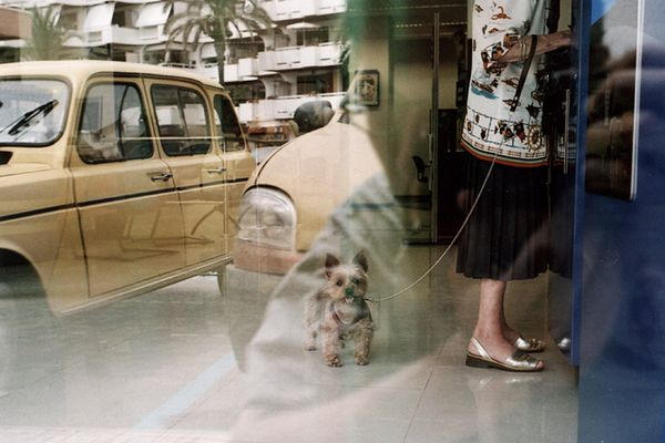 schöner hund · alte frau