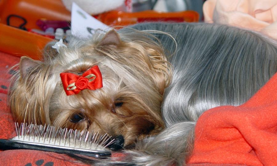 schöner Hund - armer Hund