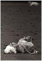 schöner Rücken,.............(2)reload