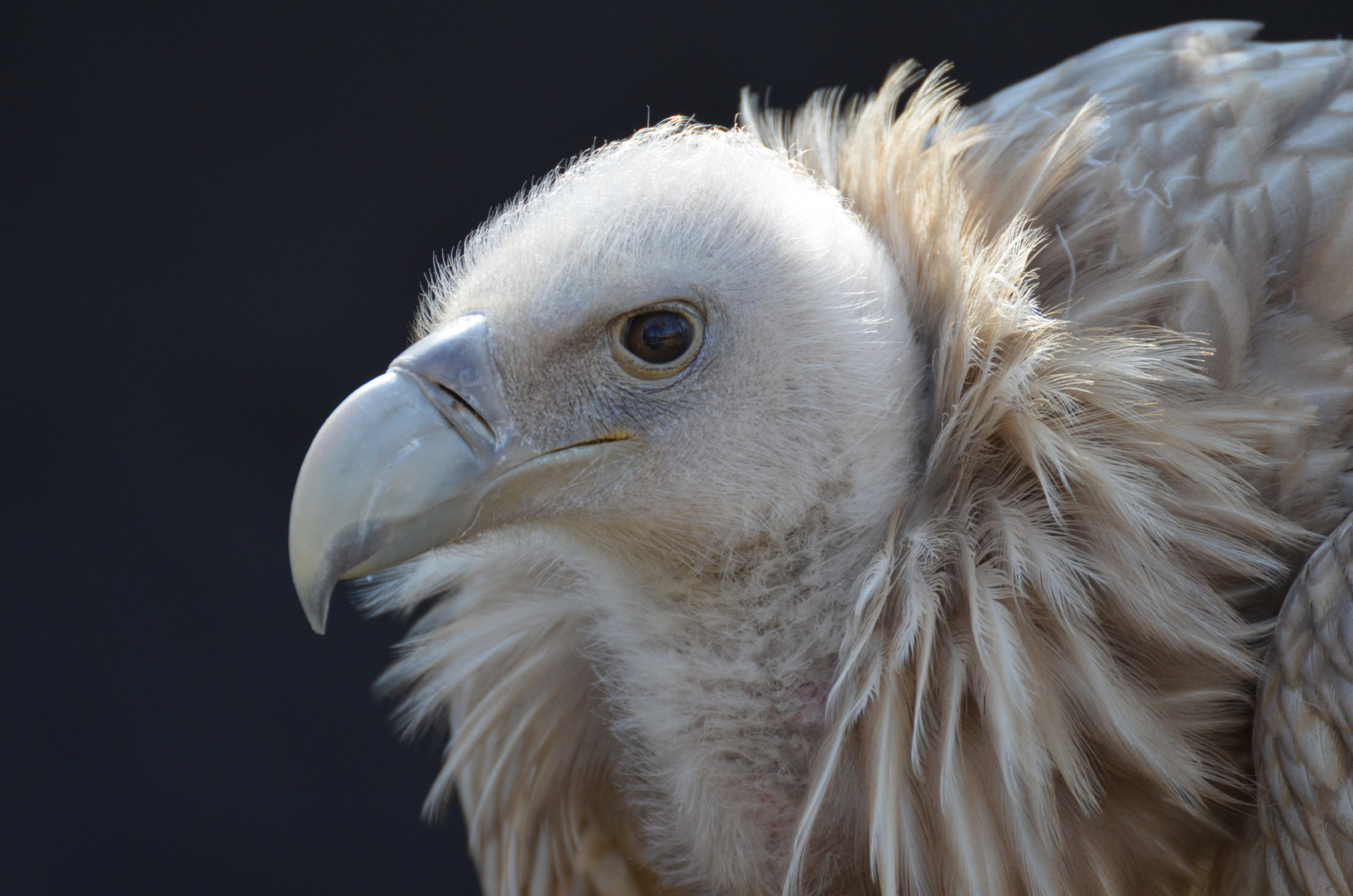 Schöner Vogel Teil 2 ;-)