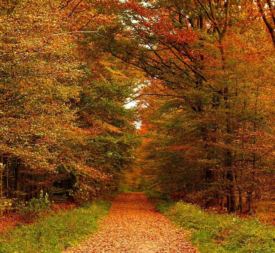 schöner Wald so im Herbst Foto & Bild  jahreszeiten