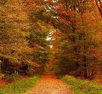 schöner Wald so im Herbst...