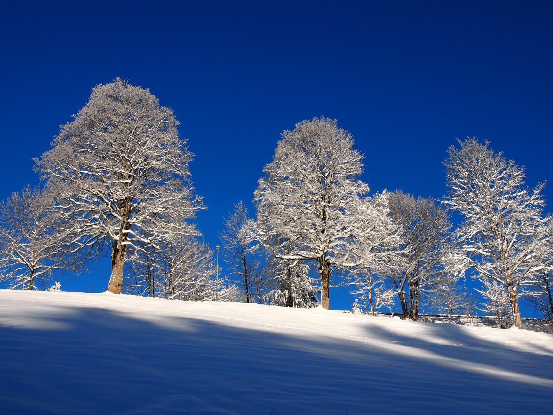 Schöner Wintermorgen 2