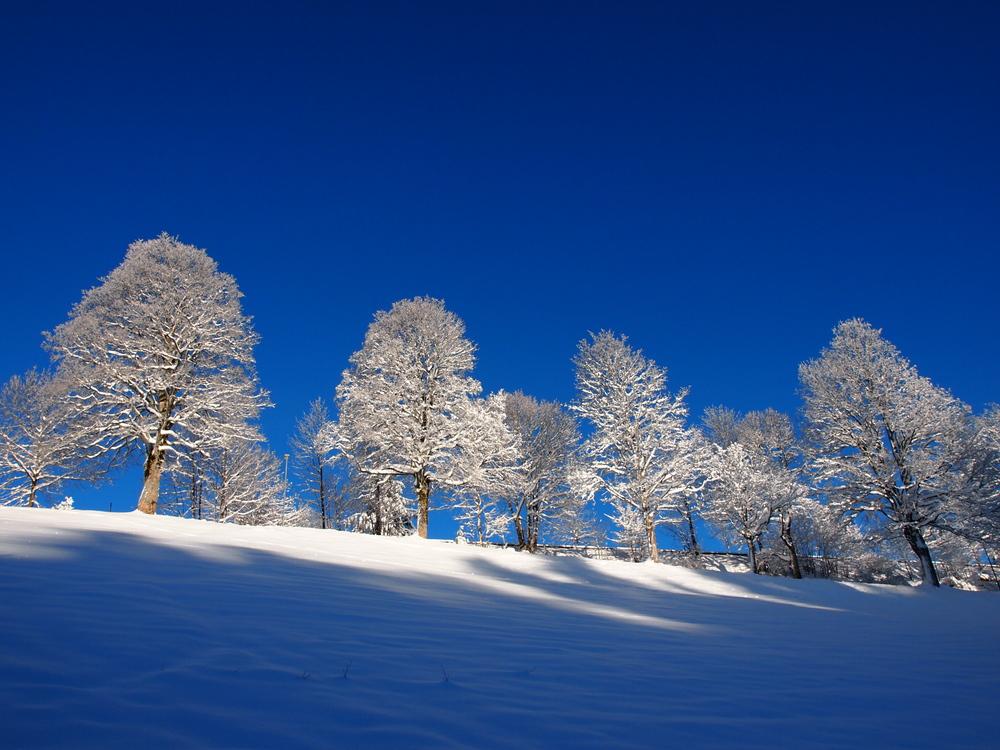 Schöner Wintermorgen