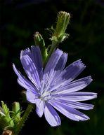 Schönes Blau I