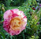 Schönes Blütenkleid