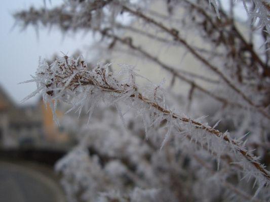 Schönes frostiges Pflanze