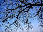Schönes Geäst eines Baumes
