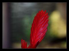 schönes rot