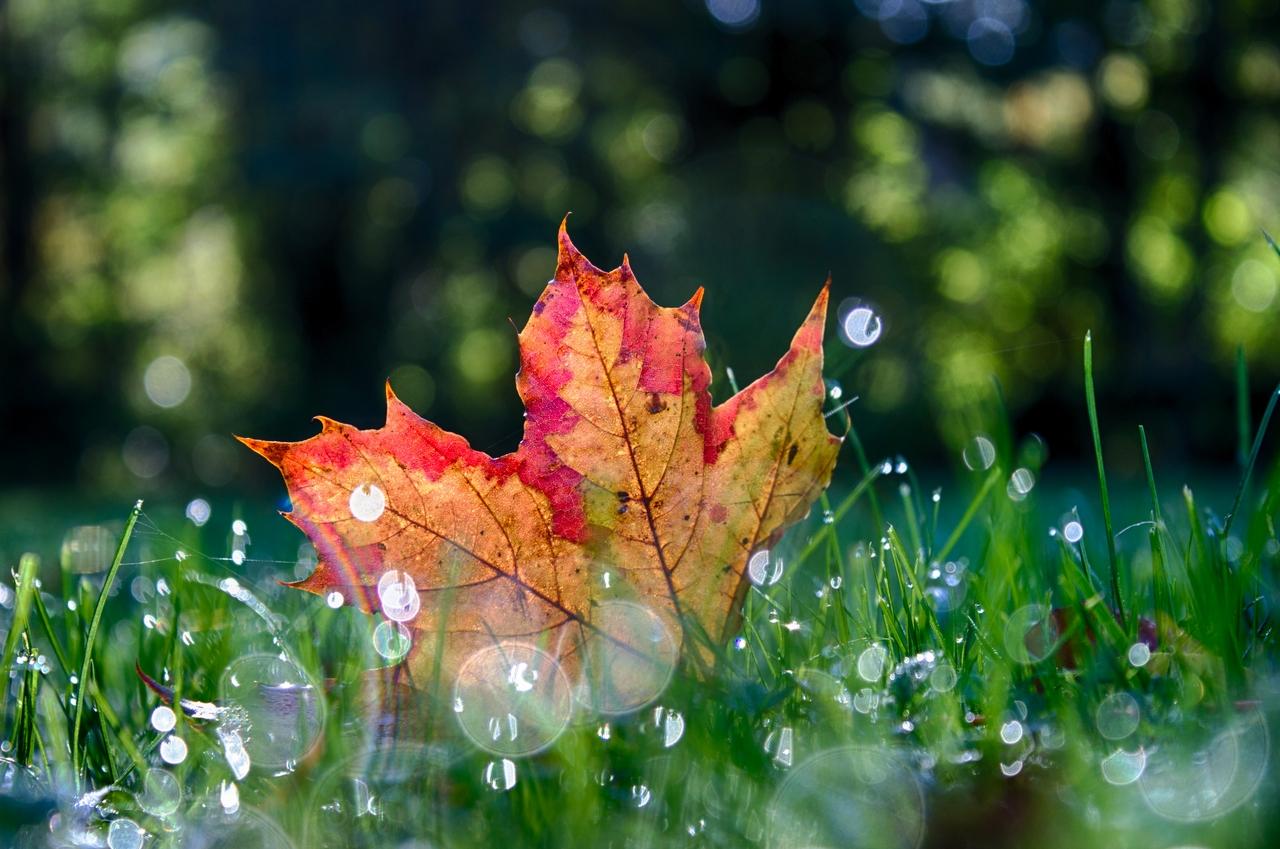 schönes vom Herbst