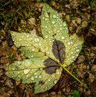 Schönheit auch bei Regen...