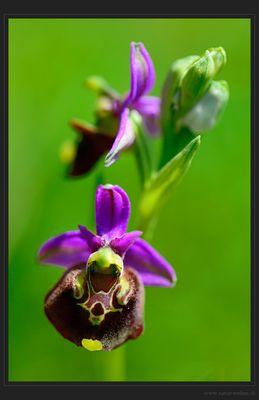 Schönheit der Wildblumenwiese