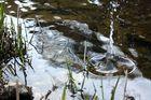 Schönheit des Wassers ...
