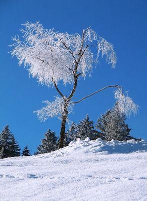 Schönheit des Winters