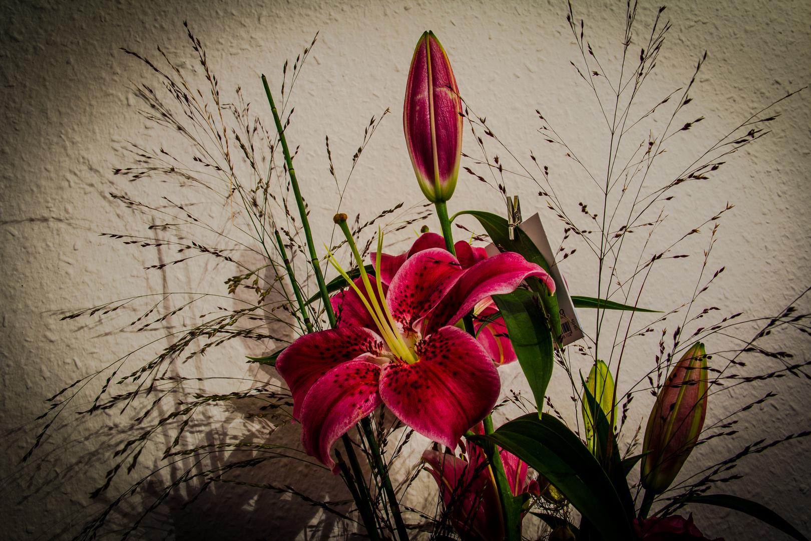 Schönheit einer Lilie