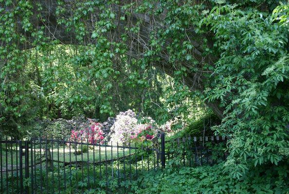 Schönheit hinter Zaun und Ketten