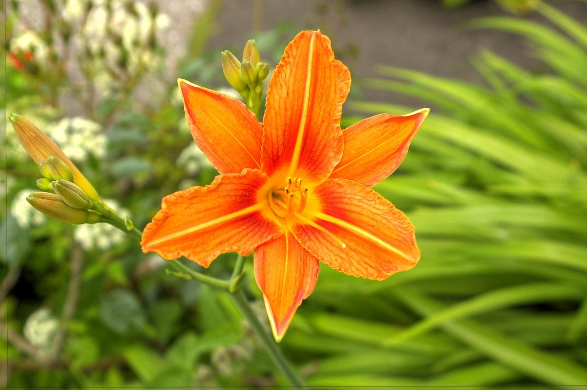 Schönheit im Garten HDR