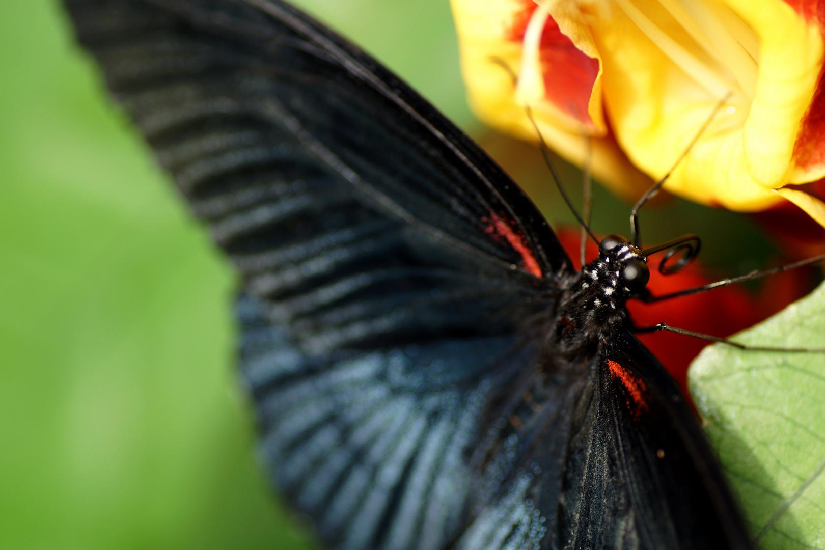 Schönheit in Schwarz