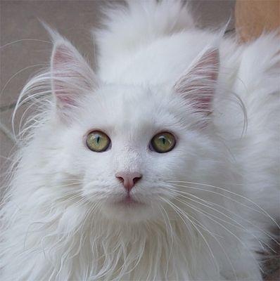 Schönheit in Weiß ....