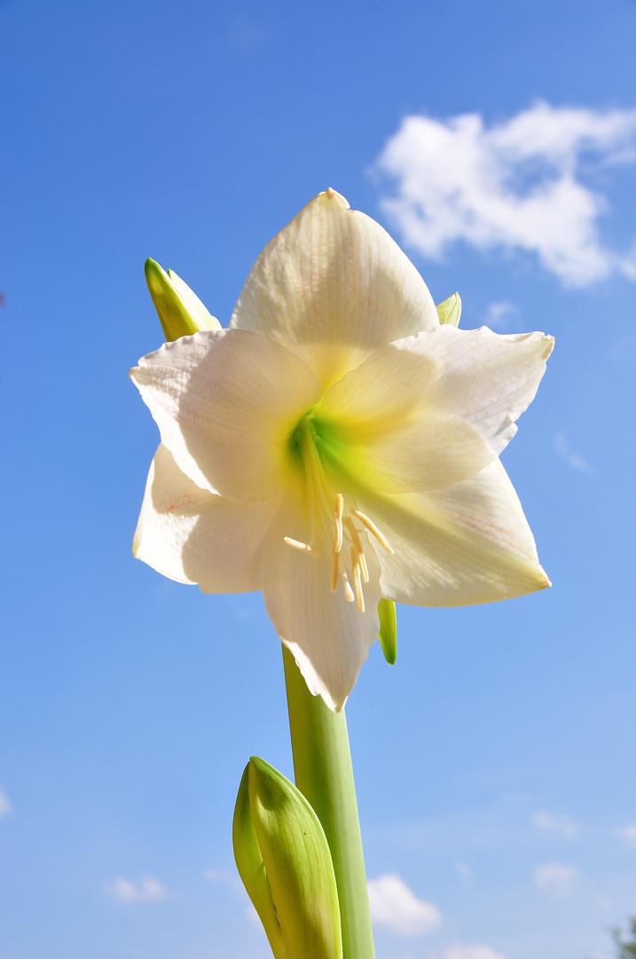Schönheit in weiß