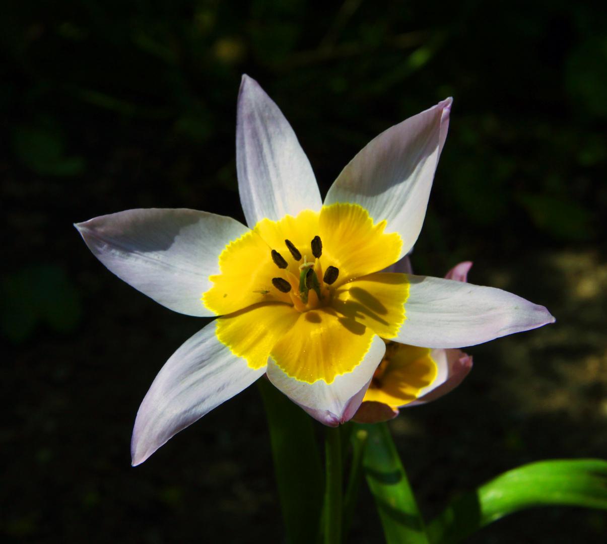 Schönheit...des Frühlings